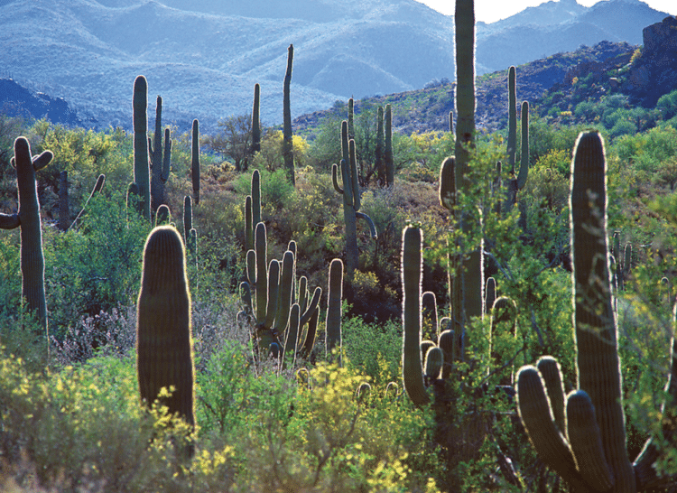 The McDowell Sonoran Preserve in Scottsdale